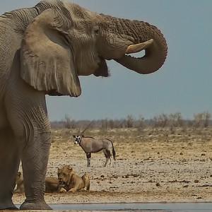 Elephant and Kions