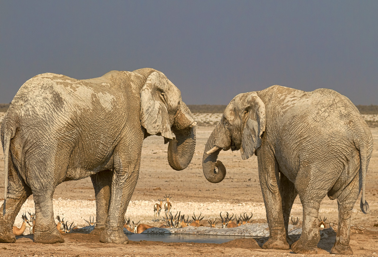Elephants socialising at the water hole
