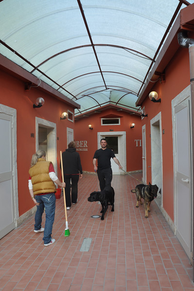 Owner of the Tiber site with his dogs striding through the washroom facilities