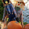 These guys own the punkins!