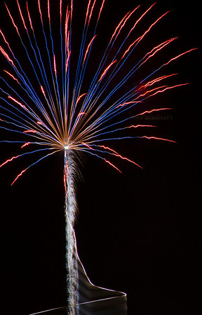 Red Blue firework tree 8298