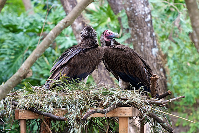 Vultures on guard
