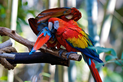 Friendly Macaws