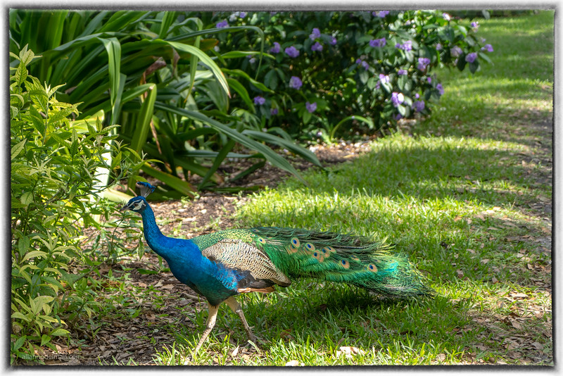 Flamingo Gardens Botanical Gardens and Wildlife Sanctuary