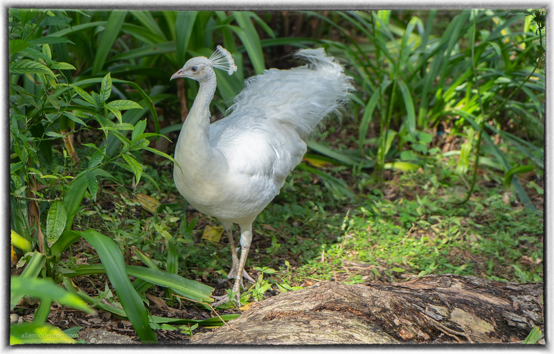 Flamingo Gardens Botanical Gardens and Wildlife Sanctuary