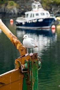 One of many gulls