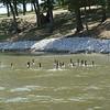 Ducks on Sun Valley Lake ( 2012 )