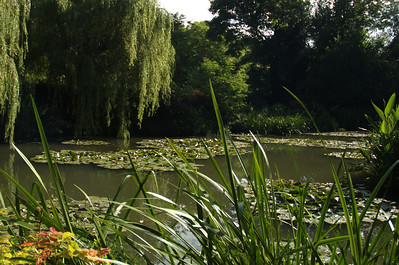 Giverny, Fondation Claude Monet - Watertuin