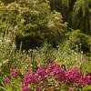 Giverny, Fondation Claude Monet - bloementuin