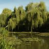 Giverny, Fondation Claude Monet - Watertuin