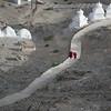 Two monks making the steep climb upto Shanti Stupa-Leh.