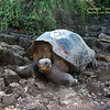 Galapagos  1009