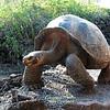 Galapagos  1010