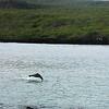 Galapagos - Sea Lion at play