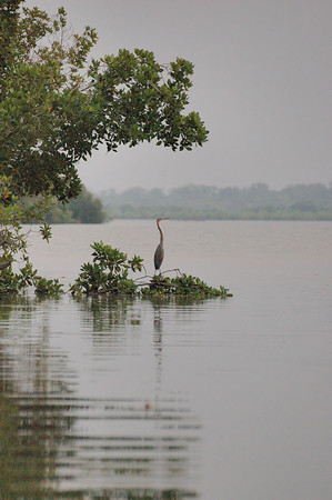 """Ah! This is why I came!"".  Heron on Gambia river at dusk."