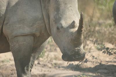 A Rhino - in the Presidence Zoo