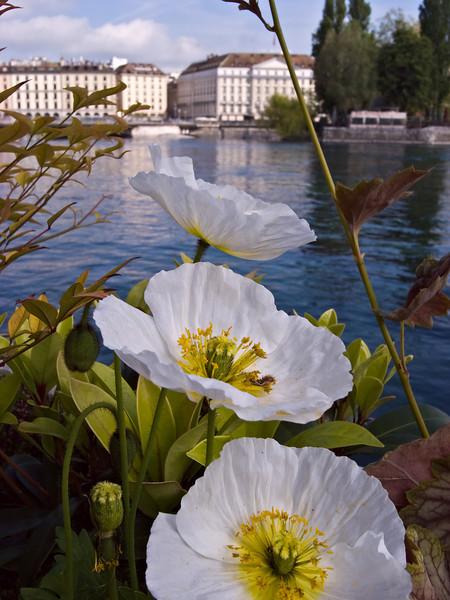 Flowers near Pont du Mont-Blanc