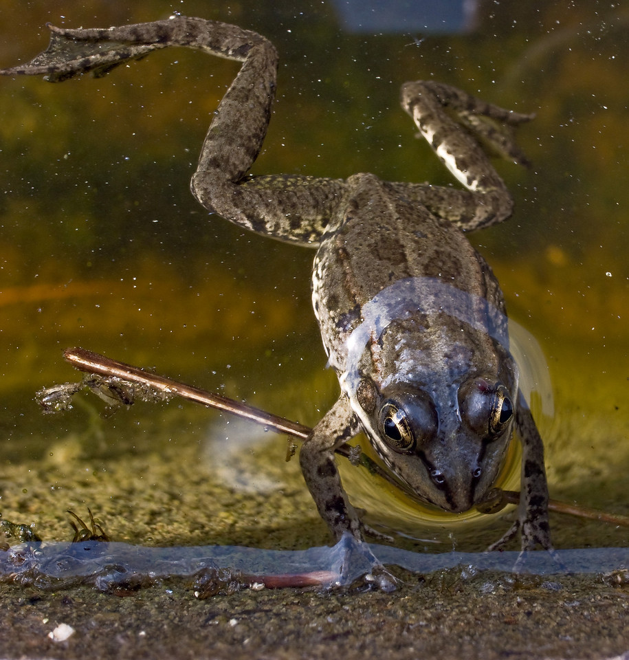 Frog at botanic gardens