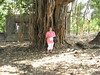 Me by a banyan tree. Fort Capo Rama.