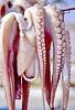 naxos - octopus