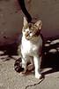 sparta - old mystras - cute cat