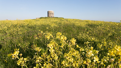 Guernsey, Places, Rousse, Wild Flowers