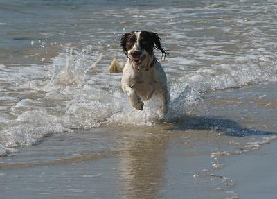 La Fontenelle, Dog, Guernsey
