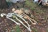 "Saturday, 30 October 2010 - the skeletons wait ""backstage."""