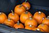 impromptu pumpkin patch in my trunk