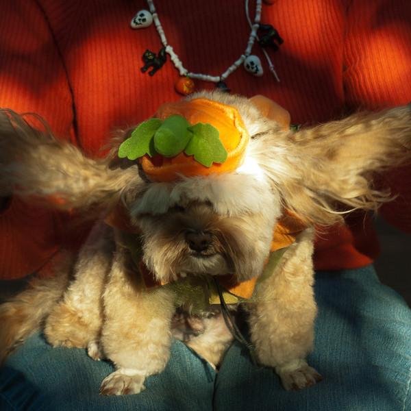 Padraig shows his costume