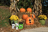 D291-2017<br /> <br /> <br /> Fall themed and Halloween displays by the HLG staff<br /> Hidden Lake Gardens, Michigan<br /> Taken October 18, 2017