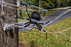 Here' one for arachniphobes