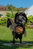 Headless Horseman of Halloween
