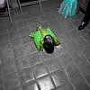 2009 Chloe's 6th Annual Halloween Party Tucson, AZ