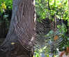 Spider Web lit by the morning sun