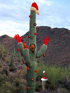 It's getting prickly in here!