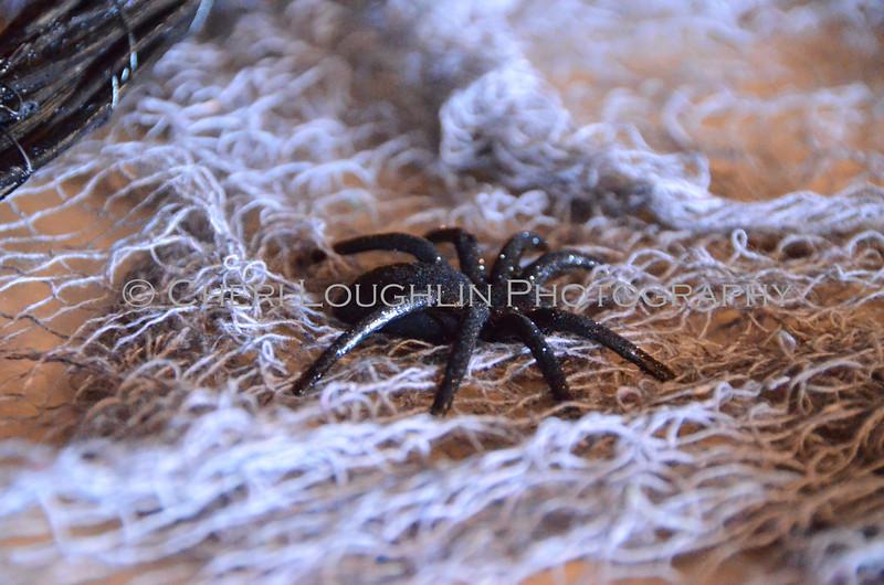 Spider DSC_5402