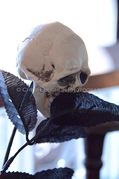 Skull Rose DSC_5407
