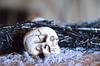Skull DSC_5401