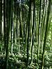 Rond het hotel een prachtig bamboebos