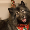 Kornelia (Nellie) the new Keeshond in holiday garb