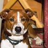 Maverick (Hannah's dog)