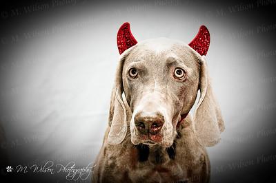 Lylah-devil_wm