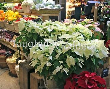 Title: Red and white pointsetta stacked among the veggies at a fruit stall.