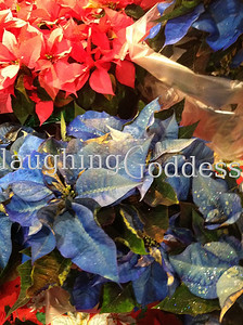 Title: Blue Christmas Flowers?