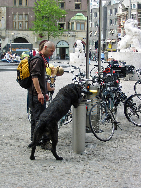 dog at drinking fountain