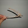 Somehow, we didn't cut the wishbone
