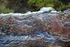 Iguassu Falls - Argentinian Side - Upper Rim of Falls 379