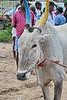 India 2017 - Road to Madurai - Local Market 36