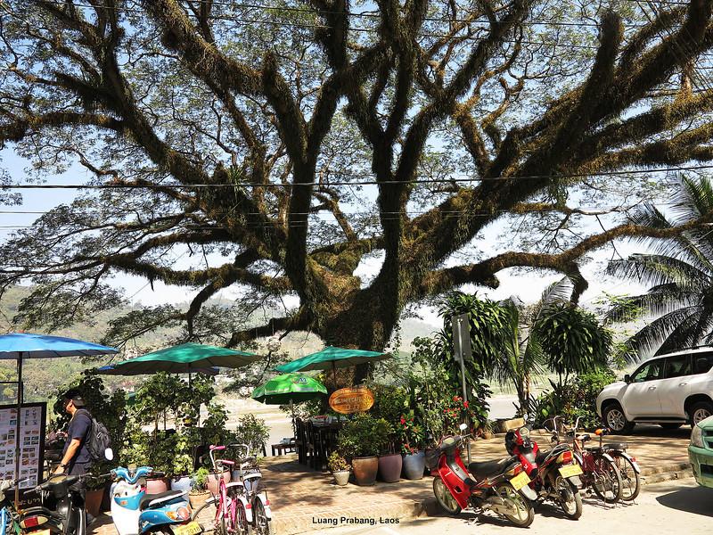 304 Luang Prabang Day 7